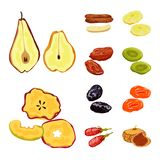 Vector design of fruit and dried icon. Set of fruit and food vector icon for stock. Vector illustration of fruit and dried symbol. Collection of fruit and food stock illustration
