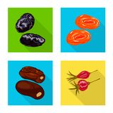 Vector design of fruit and dried  icon. Set of fruit and food  vector icon for stock. Vector illustration of fruit and dried  symbol. Collection of fruit and stock illustration
