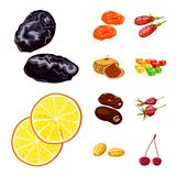 Vector design of fruit and dried sign. Collection of fruit and food stock vector illustration. Vector illustration of fruit and dried logo. Set of fruit and stock illustration