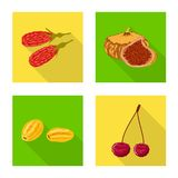 Isolated object of fruit and dried  symbol. Set of fruit and food  vector icon for stock. Vector design of fruit and dried  sign. Collection of fruit and food stock illustration
