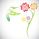 Vector design of hummingbird and flowers Stock Images