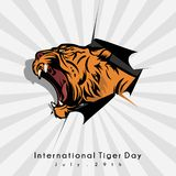 International Tiger Day. Vector design of international tiger days with vector roaring tigers and tearing banners royalty free illustration