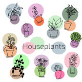 Vector design set of house plants in colorful circles Royalty Free Stock Image