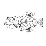 Vector design template of aggressive  fish skeleton. Vector design template of aggressive tropical fish skeleton Stock Images