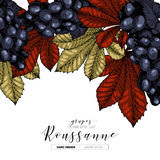 Vector design template of wine branding. Hand drawn. Colored grape and leaves. Luxury wines. Frame composition. Engraved. Art. Use for restaurant, menu Stock Photo