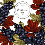 Vector design template of wine branding. Hand drawn. Colored grape and leaves. Luxury wines. Frame composition. Engraved. Art. Use for restaurant, menu Stock Photos