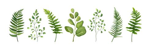 Vector designer elements set collection of green forest fern fro Stock Image