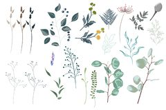 Vector designer elements set collection of green forest fern, tropical green eucalyptus greenery art foliage natural leaves herbs. stock illustration