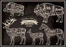 Vector diagram cut carcasses boar, bison, deer, horse Stock Image
