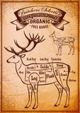 Vector diagram cut carcasses deer. Vector diagram cut carcasses of deer venison Royalty Free Stock Photos