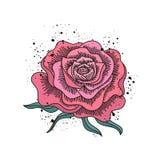 Vector dibujado mano de la rosa del rojo ilustración del vector