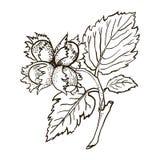 Vector dibujado mano del ejemplo del bosquejo Imágenes de archivo libres de regalías