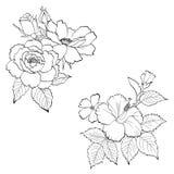 Vector dibujado mano floral Imágenes de archivo libres de regalías
