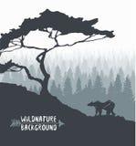 Vector dibujado silueta del oso del árbol de pino del bosque Imagenes de archivo
