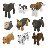 Vector different breed isometric dogs Royalty Free Stock Photo