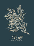 Vector dill illustration on dark background. Hand drawn sketch of spice plant. Botanical drawing of aromatic herb. Fennel isolated Stock Image