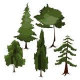 Vector diverso de árbol Fotografía de archivo libre de regalías
