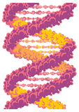 Vector DNA chain Stock Photo