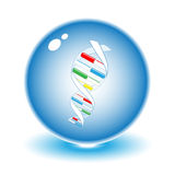 Vector dna illustration. Simply change. Other medical vectors you can see in my portfolio Stock Photo