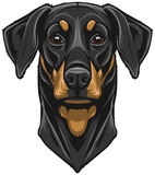 Vector Doberman Pinscher Stock Images