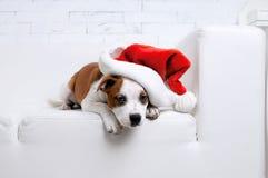 Vector dog stock image