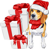 Vector Dog Beagle in the hat of Santa Claus Stock Images