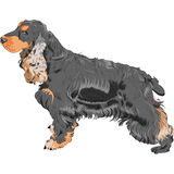 Vector Dog black English Cocker Spaniel breed Stock Images