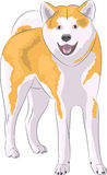 Vector dog breed Akita Inu. Royalty Free Stock Image
