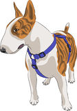 Vector dog breed Bull Terrier Royalty Free Stock Photo