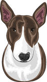 Vector dog breed Bull Terrier. Isolated on a white background Royalty Free Stock Photo