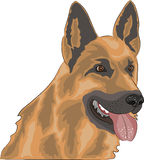 Vector dog breed German Shepherd. Young, red-haired, dog breed German Shepherd Royalty Free Stock Images