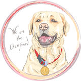 Vector dog breed Labrador Retriever champion Royalty Free Stock Photography