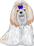 Vector dog breed Shih Tzu. Stock Image