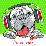 Vector dog Bullmastiff with phone headset royalty free stock image