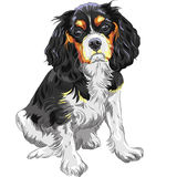 Vector dog Cavalier King Charles Spaniel Stock Photos