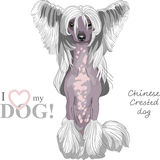 Vector dog Chinese Crested breed stock images