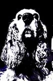 Vector dog cocker spaniel. To black and white with blue. HD wallpaper of dogs and pets Stock Images