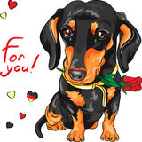 Vector dog dachshund with red flower Royalty Free Stock Photo