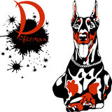 Vector dog Doberman Pinscher breed. Dog Doberman Pinscher breed lying and smilling royalty free illustration