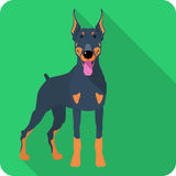 Vector dog Doberman Pinscher icon flat design. Vector serious dog Doberman Pinscher body icon flat design Royalty Free Stock Photo