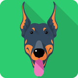 Vector dog Doberman Pinscher icon flat design. Vector serious dog Doberman Pinscher head icon flat design Royalty Free Stock Images