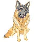 Vector Dog German shepherd breed smile. Color sketch portrait of a dog German shepherd breed sitting and smile Stock Photos