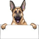 Vector Dog German shepherd breed smiles Stock Images