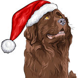 Vector Dog German shepherd in Santa Claus hat. Vector Closeup portrait of a dog German shepherd in a Christmas hat of Santa Claus Stock Photos