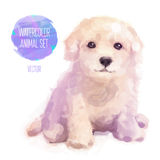 Vector dog hand painted watercolor illustration Stock Photography