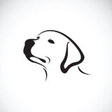 Vector of a dog headLabrador Retriever on white background. Pet royalty free illustration