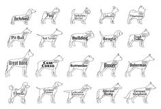 Vector dog icons collection isolated on white. Dogs breeds names Royalty Free Stock Image
