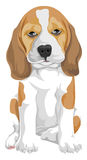 Vector of dog. Royalty Free Stock Photos