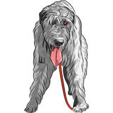 Vector dog Irish Wolfhound breed Royalty Free Stock Images