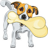 Vector dog Jack Russell Terrier keeps the bone Royalty Free Stock Photography